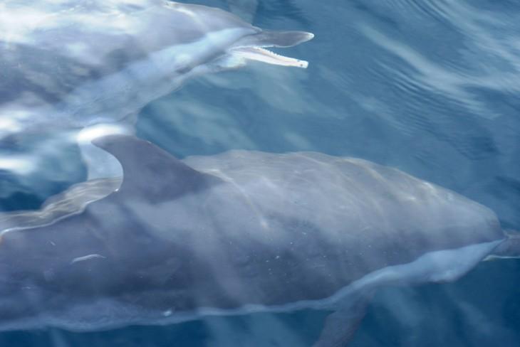 dolphin _1254.JPG