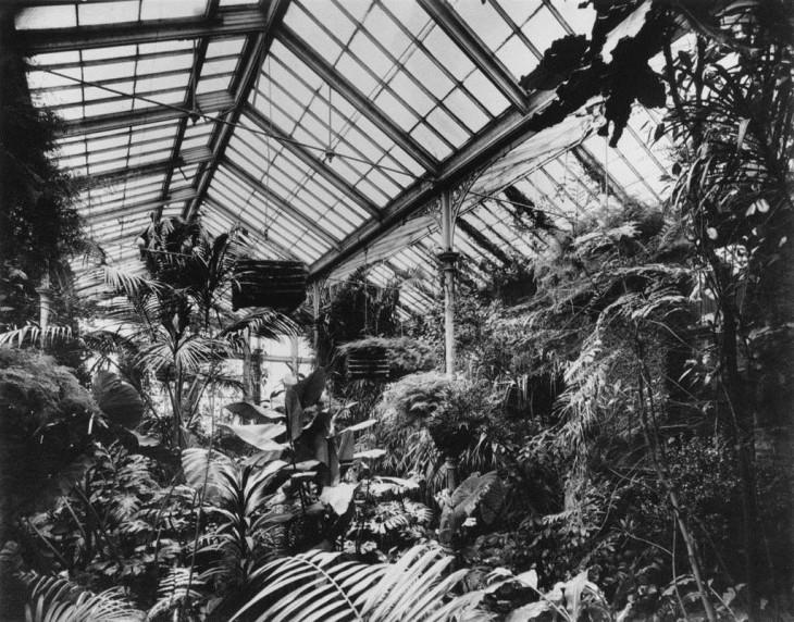 DoughtyHouse,Conservatoryin1905,interiorpic.jpg
