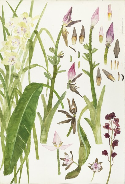 2 Elizabeth Blackadder Orchids and Bananas, 1989, watercolour (c) The Scottish Gallery.jpg